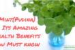 mint-pudina-amazing-health-benefits
